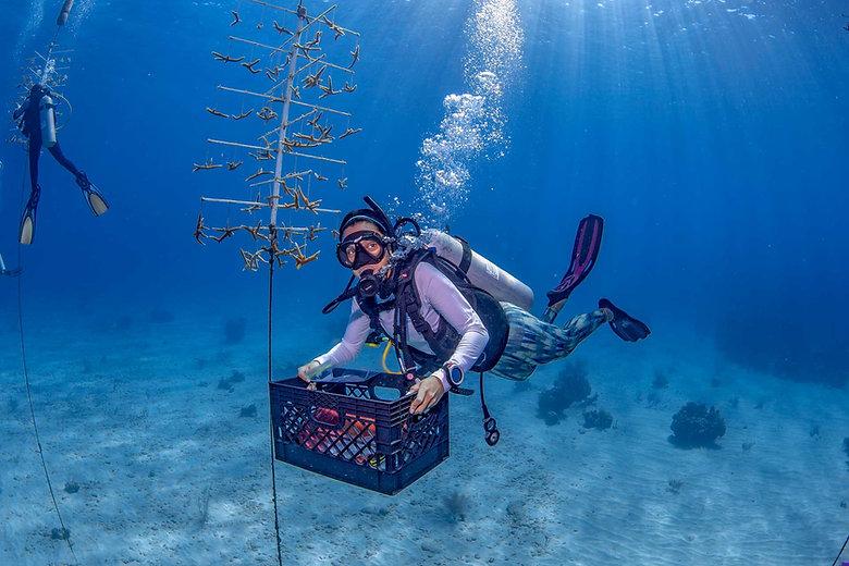 coralreef2.jpg