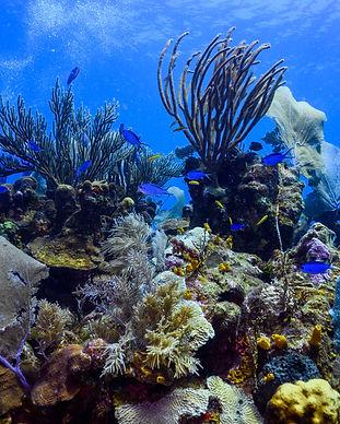 The Fish Tank (1).jpg
