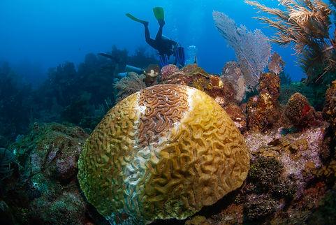 0131_coral disease.jpg