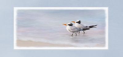 Birds  edge.JPEG