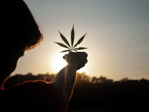 3 Things To Know Before Joining The Cannabis Industry