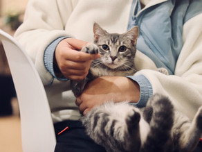 Can CBD Help Improve the Quality of Life For a Cat with FeLV?