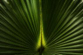 Fan 6963.jpg