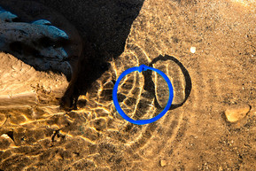 Blue circle In A Pool