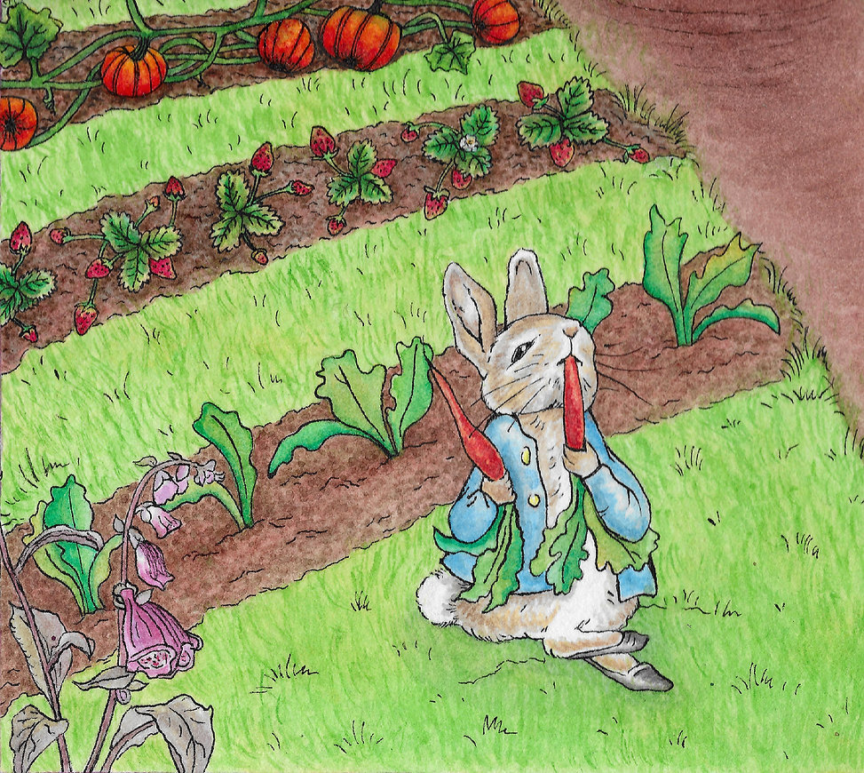 Peter Rabbit in a garden, eating a carrot