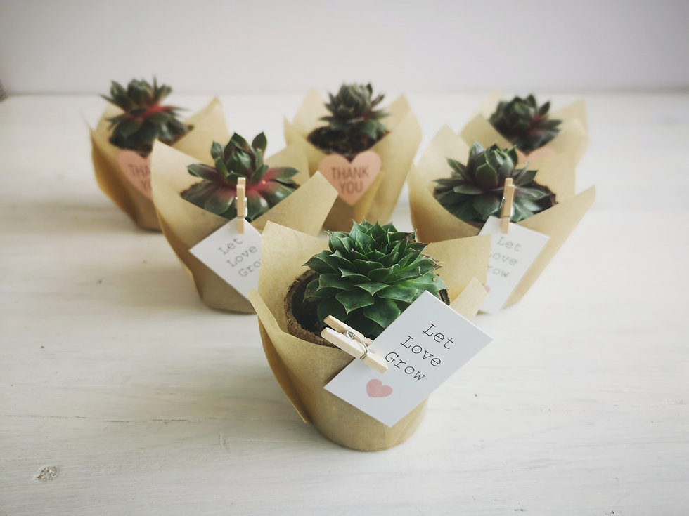 hard-succulent-wedding-favours.jpg