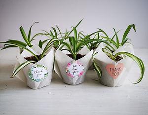 spider-plants-paper-wrap.jpg