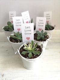 Succulent wedding favours.jpg