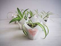 spider-plant-paper-wrap-thankyou.jpg