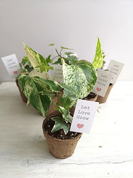 small house plant wedding favours.jpg