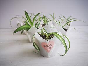 spider-plant-paper-wrap.jpg