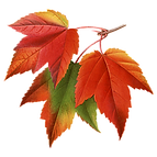 autumn-leaves.png
