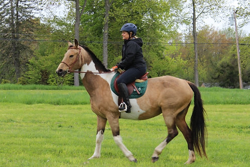 Adult Rider