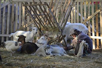 ptit garccon et animaux.jpg