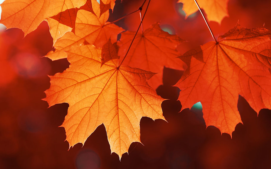 colorful-fall-leaves-SELLLEAVES1017.jpg