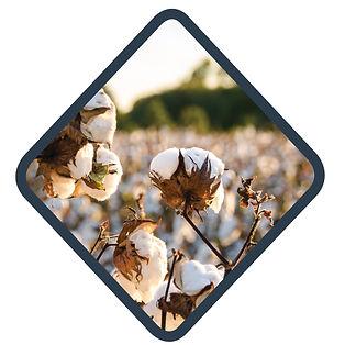 infomed ag cotton