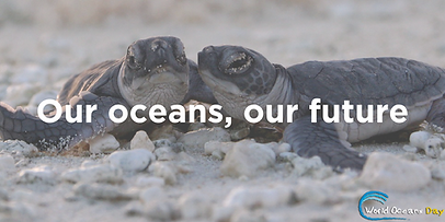 World oceans day baby turtles