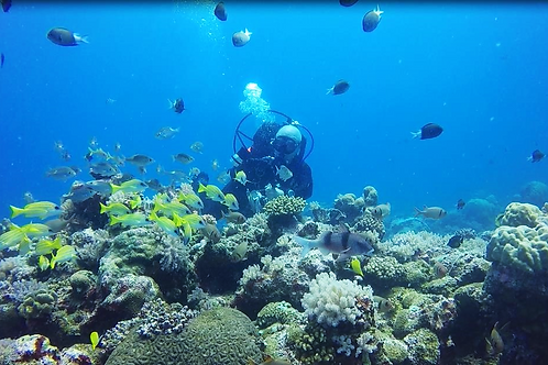 Single Dive