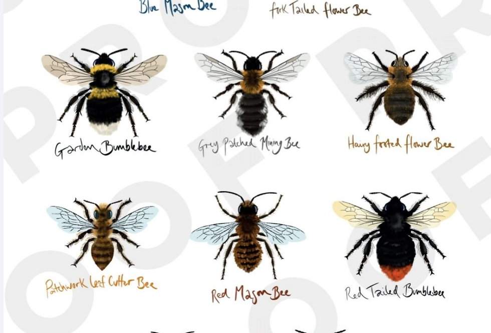 Garden Bees of Great Britain - A3 Print