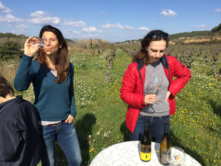 Tasting in the vineyard with our friends of Cava Terra de Marca.