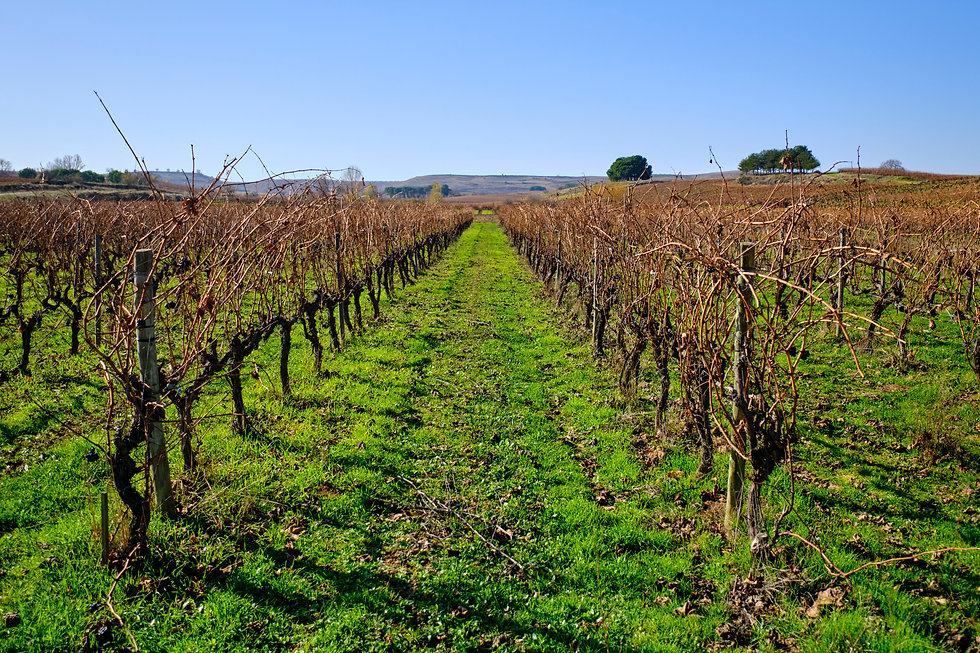 paramo arroyo, vino ecologico, ribera del duero, bodega paramo arroyo