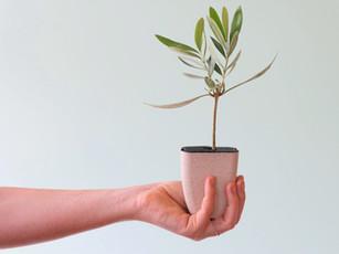 Onze boompjes in een nieuw jasj– eh – potje