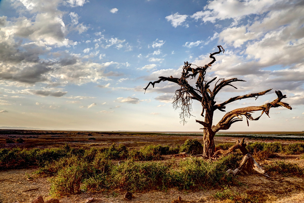 Dry and barren wasteland in the midst of summer