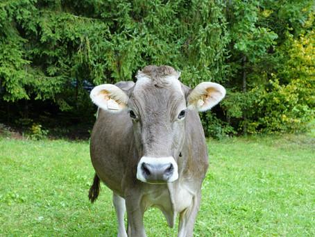 Карантин в самом разгаре, а производство мяса и мясосодержащих продуктов питания растет