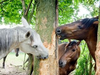 Hoe een paard zichzelf traint...zonder jou...