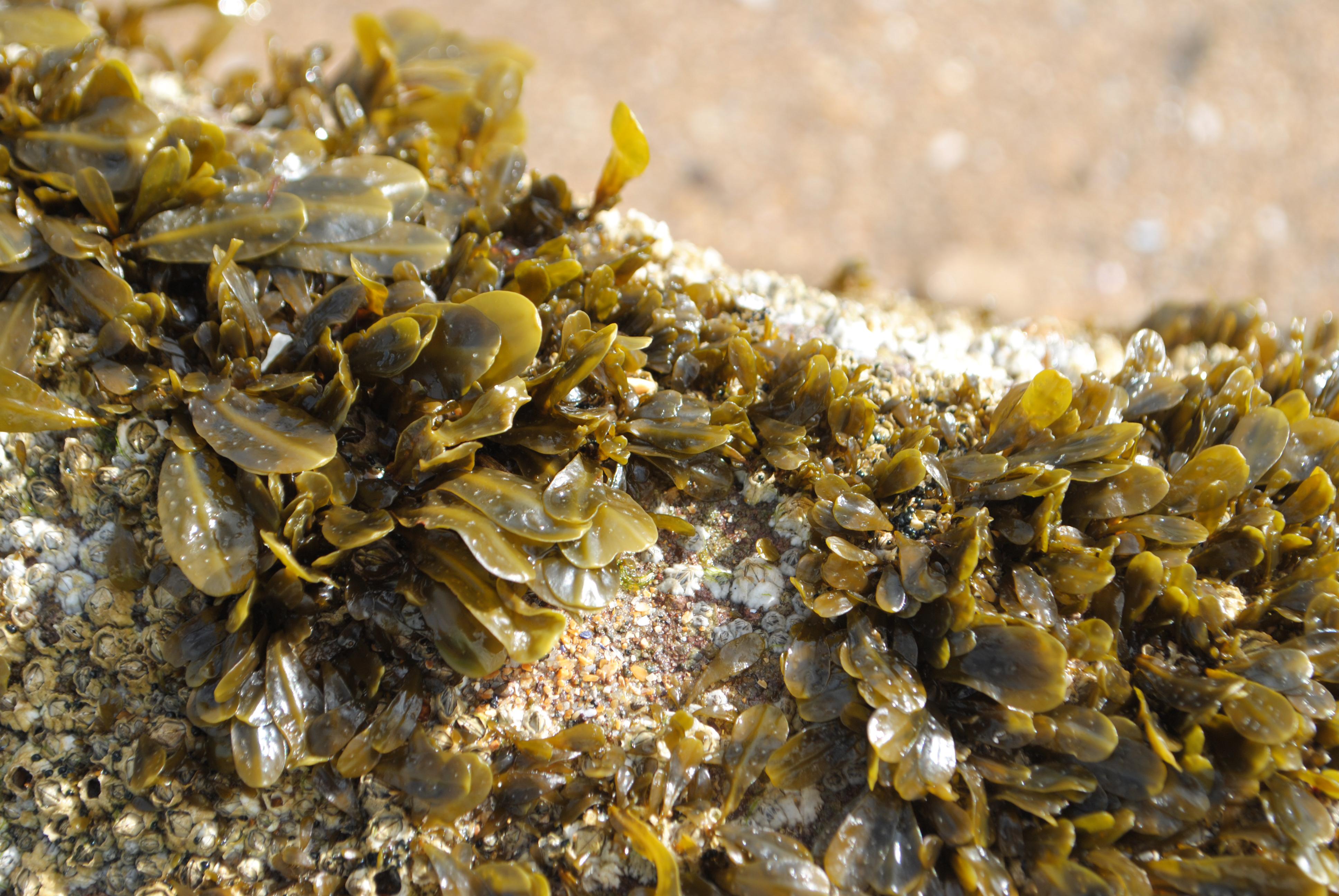 Baby seaweed and barnacles