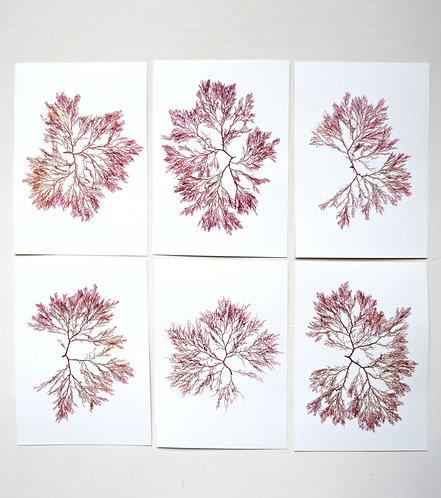 Pressed Seaweed, Set 17. 6 x A5.