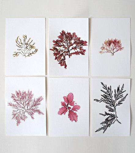 Pressed Seaweed, Set 18. 6 x A5.