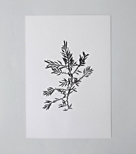 Pressed Seaweed, Single 12. A4.