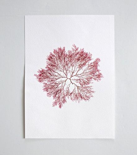 Pressed Seaweed, Single 14. A4.