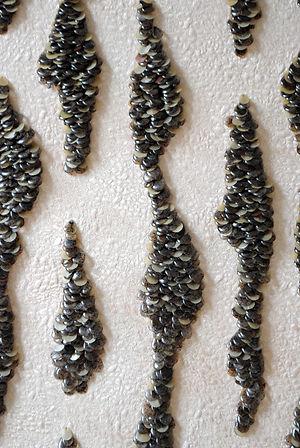 Seaweed Ripple No. 2. Detail.. jpg.jpg