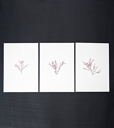 Pressed Seaweed, Set of 3. Unframed.