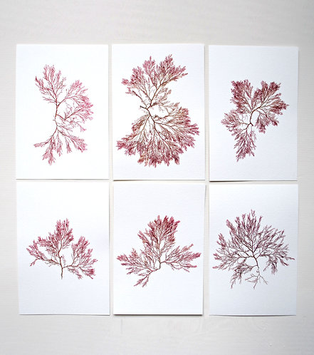 Pressed Seaweed, Set 19. 6 x A5.