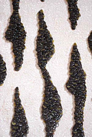 Seaweed_Ripple_No.2._Detail.jpg
