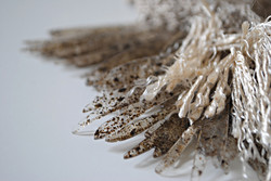 Pelvetia knitted tassels