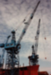 Cranes_at_Robbs_Leith