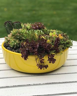 Bowl of Sunshine.jpg