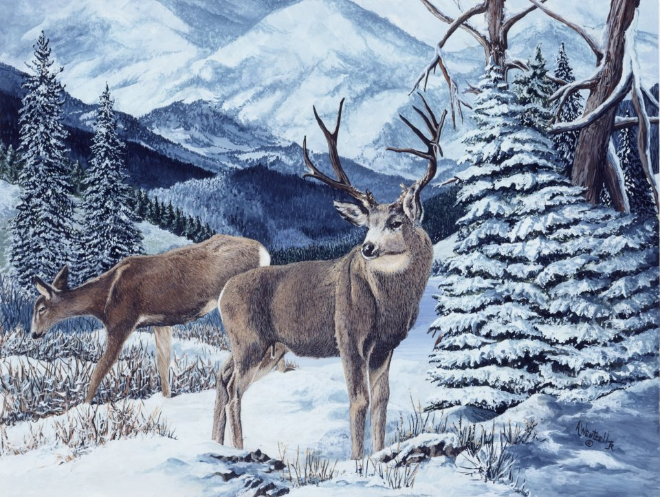 wildlife art al wentzell1
