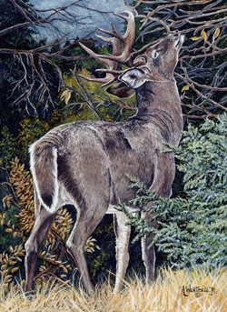al wentzell wildlife art10