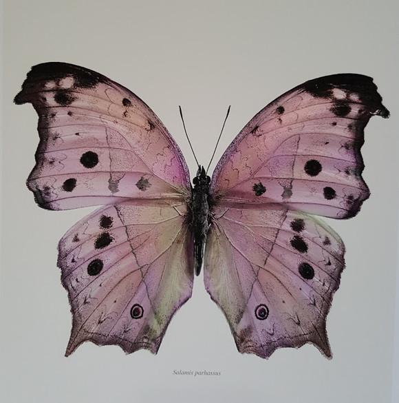 הפרפרים של לינג'ברג