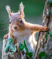 squirrell.png
