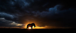 The Art of Wildlife Photography Part I