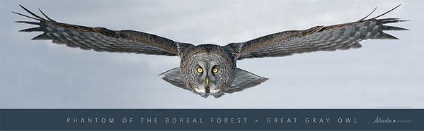 Owls of Alberta Poste
