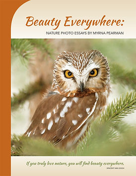 Beauty Everywhere: Natue Photo Essays by Myrna Peaman
