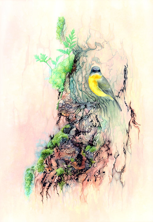 Eastern yellow robin (10 x 14 inches)