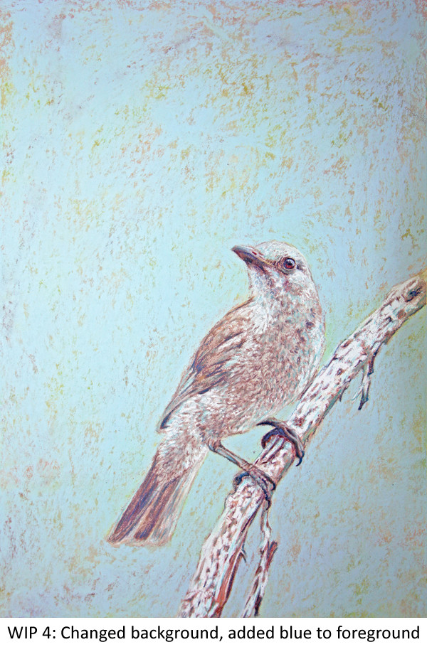 WIP 4 Shrike-thrush Laura Grogan 600 blue.jpg